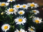 Flower001_2